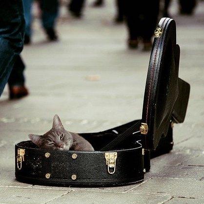 ギター ベース 保管